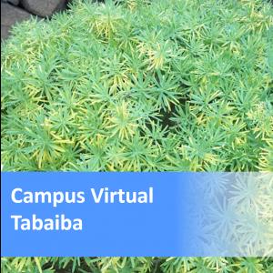 Tabaiba